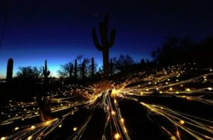 Bruce Munro Sagauro Fiber Optic Lights Exhibit at Desert Botanical Garden - VisitPhoenix on Twitter